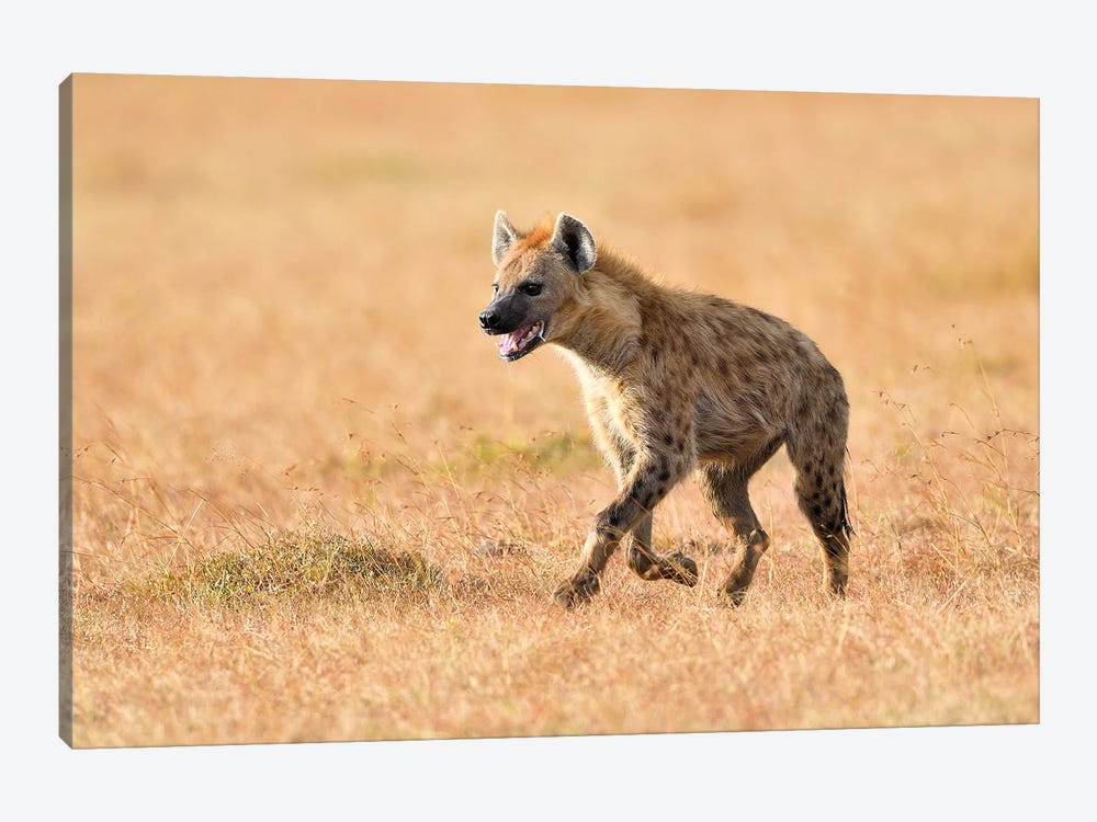 Exhausted Hyena by Elmar Weiss 1-piece Canvas Print