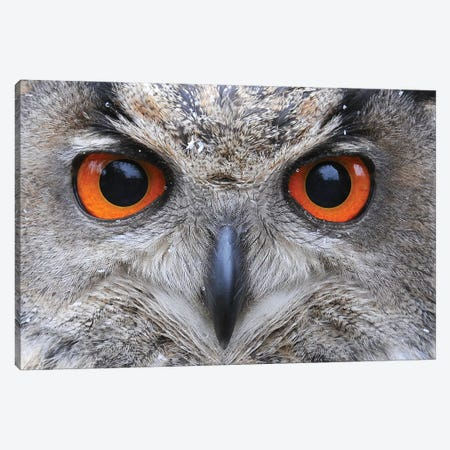 Eagle Owl Eyes Canvas Print #ELM30} by Elmar Weiss Canvas Art Print