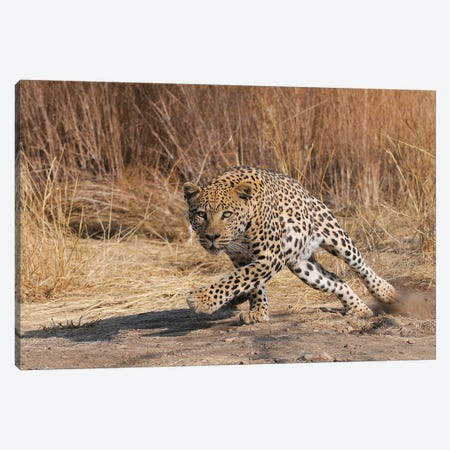Leopard Attack Canvas Print #ELM318} by Elmar Weiss Canvas Wall Art