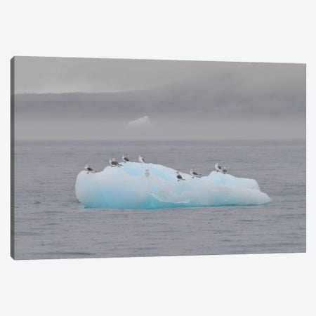 Resting Birds - Disco Bay, Greenland Canvas Print #ELM349} by Elmar Weiss Art Print
