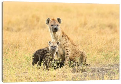 Spotted Hyeanas - Mother And Pup Canvas Art Print