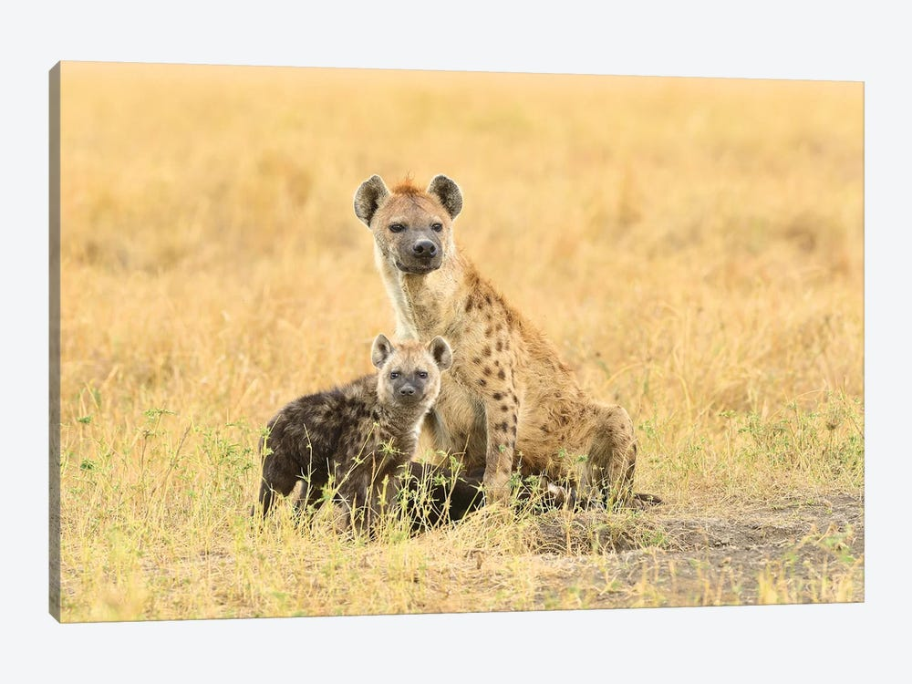 Spotted Hyeanas - Mother And Pup by Elmar Weiss 1-piece Canvas Print