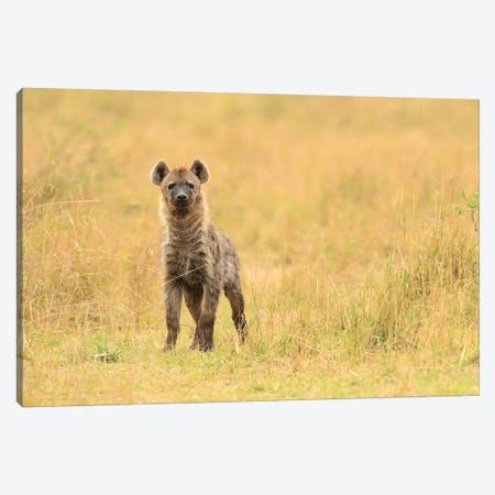 Spotted Hyaena Frontal Canvas Print #ELM371} by Elmar Weiss Canvas Wall Art