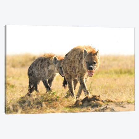 Spotted Hyenas Walking By Canvas Print #ELM372} by Elmar Weiss Canvas Artwork