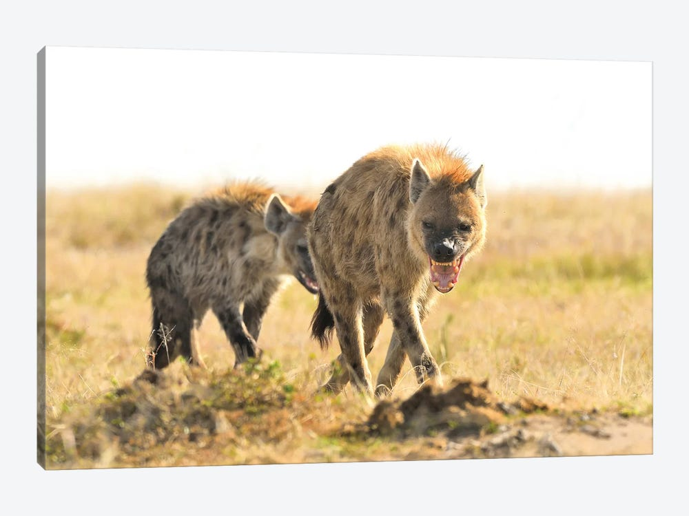 Spotted Hyenas Walking By by Elmar Weiss 1-piece Canvas Print