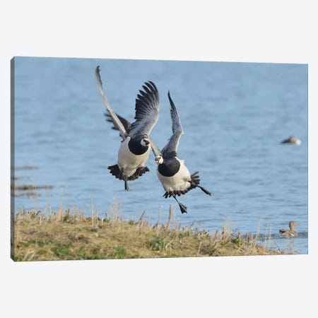 The Chase - Barnacle Geese 3-Piece Canvas #ELM378} by Elmar Weiss Canvas Wall Art