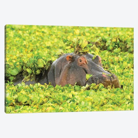 Hippo Undercover Canvas Print #ELM386} by Elmar Weiss Canvas Artwork