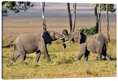 Wrestling Elephants Canvas Art Print