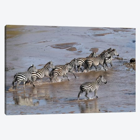 Zebras Crossing A River Canvas Print #ELM397} by Elmar Weiss Canvas Print