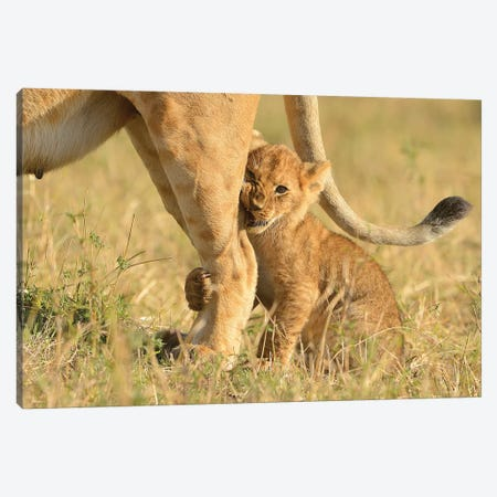 First Hunt - Crowned With Success Canvas Print #ELM42} by Elmar Weiss Canvas Wall Art