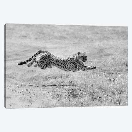Hunting Mode Canvas Print #ELM58} by Elmar Weiss Art Print
