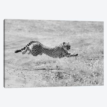 Hunting Mode Canvas Print #ELM58} by Elmar Weiss Art Print