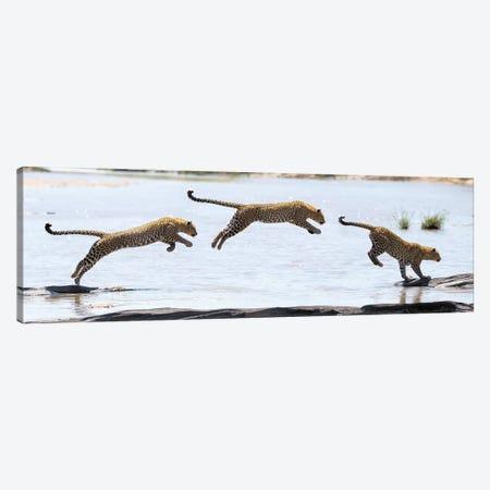 Hydrophobic Leopard Canvas Print #ELM62} by Elmar Weiss Canvas Art