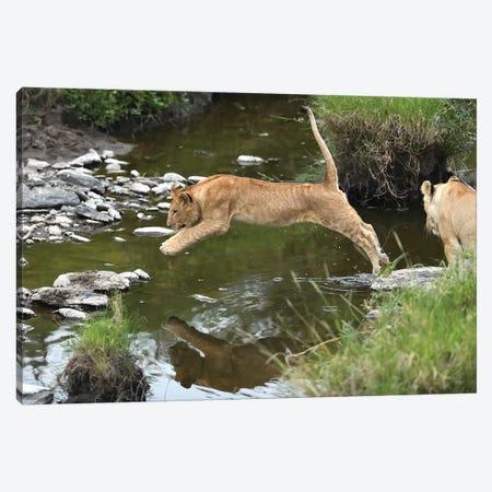 Jumpng Lion Cub Canvas Print #ELM69} by Elmar Weiss Canvas Wall Art