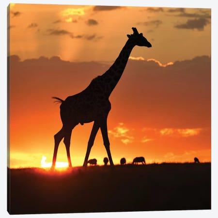 Masai Mara Sunset Canvas Print #ELM85} by Elmar Weiss Art Print