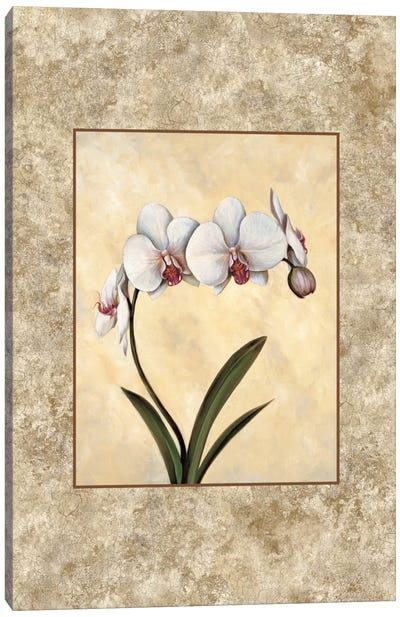 Perfection I Canvas Art Print