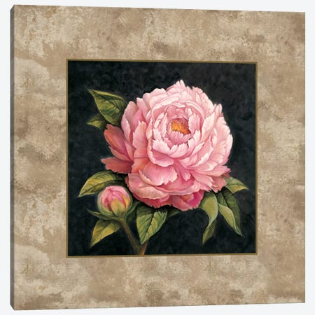 Pink Peony Canvas Print #ELO3} by E. Lopez Canvas Wall Art