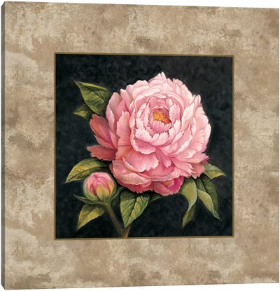 Pink Peony Canvas Art Print