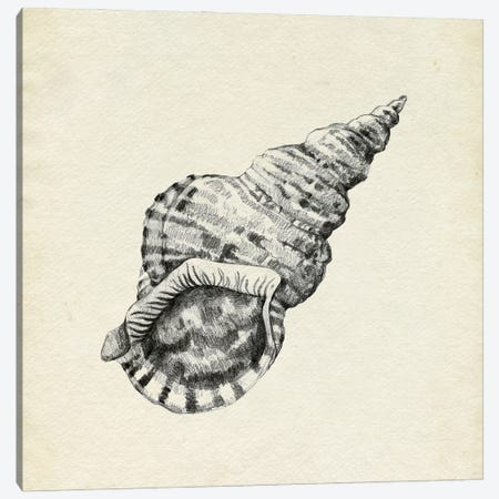 Seashell Pencil Sketch I Canvas Print #EMC113} by Emma Caroline Canvas Print
