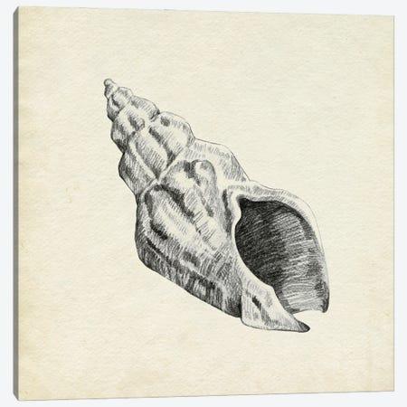 Seashell Pencil Sketch II Canvas Print #EMC114} by Emma Caroline Canvas Wall Art