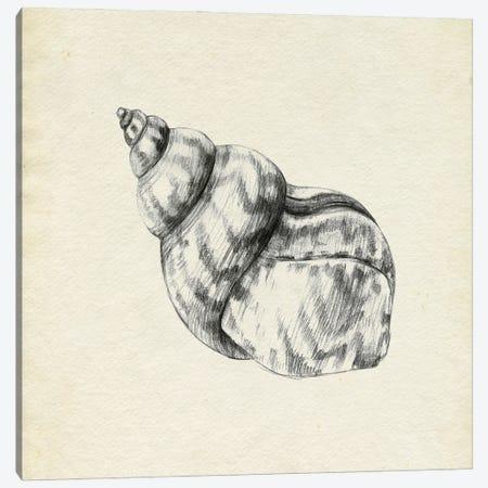 Seashell Pencil Sketch III Canvas Print #EMC115} by Emma Caroline Canvas Wall Art