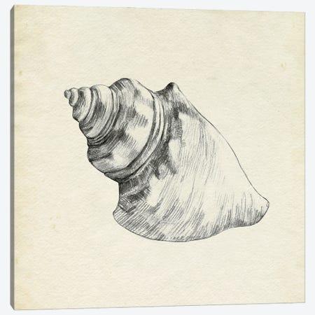 Seashell Pencil Sketch IV Canvas Print #EMC116} by Emma Caroline Canvas Art