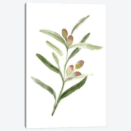 Sweet Olive Branch II Canvas Print #EMC122} by Emma Caroline Canvas Artwork