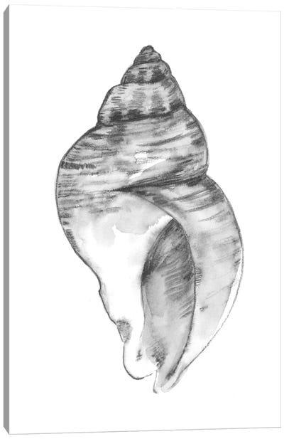 Quiet Conch I Canvas Art Print