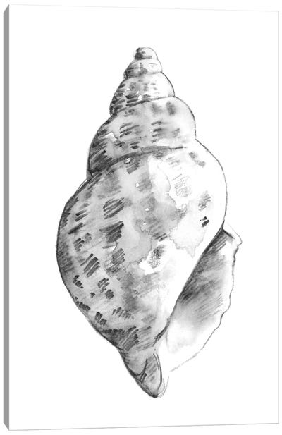 Quiet Conch II Canvas Art Print