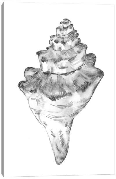 Quiet Conch III Canvas Art Print