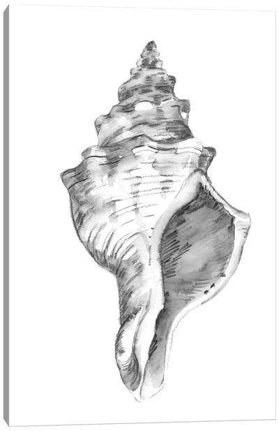 Quiet Conch IV Canvas Art Print