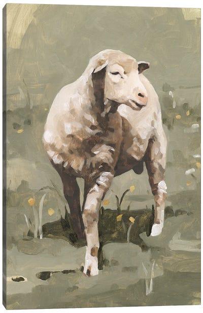 Spring Sheep I Canvas Art Print