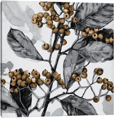 Holly Shadow I Canvas Art Print