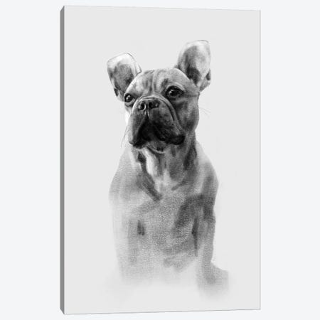 Pug Portrait I Canvas Print #EMC5} by Emma Caroline Canvas Wall Art
