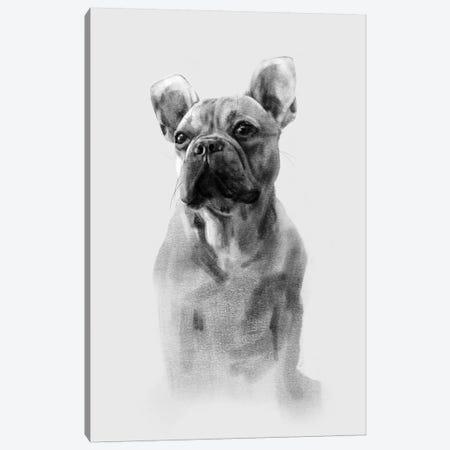French Bulldog Portrait I Canvas Print #EMC5} by Emma Caroline Canvas Wall Art