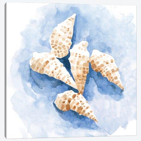 Shell Impressions I Canvas Print #EMC65} by Emma Caroline Canvas Artwork
