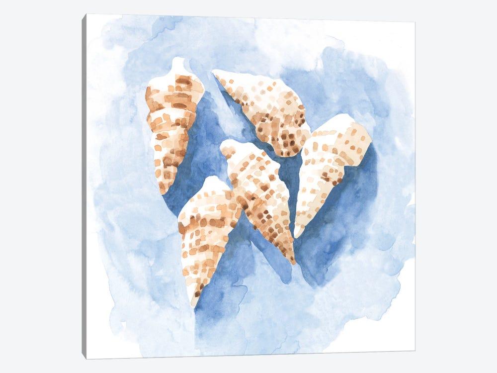 Shell Impressions II by Emma Caroline 1-piece Canvas Print