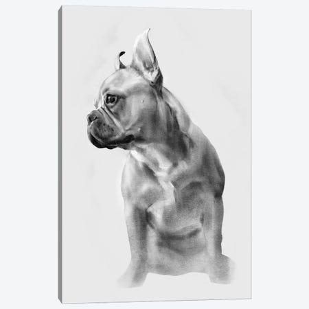 French Bulldog Portrait II Canvas Print #EMC6} by Emma Caroline Canvas Artwork