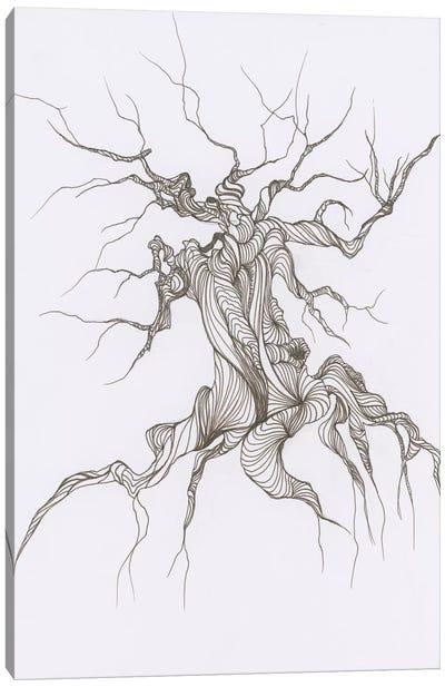 Gnarly Tree Canvas Print #EME37