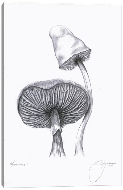 Mushrooms One Canvas Art Print