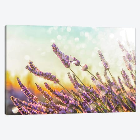 Sparkling Lavender Canvas Print #EMN103} by Manjik Pictures Canvas Print