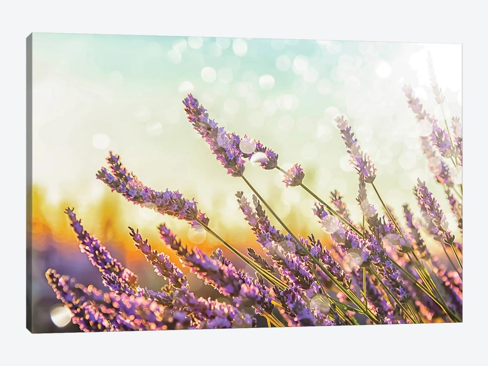 Sparkling Lavender by Manjik Pictures 1-piece Canvas Art Print