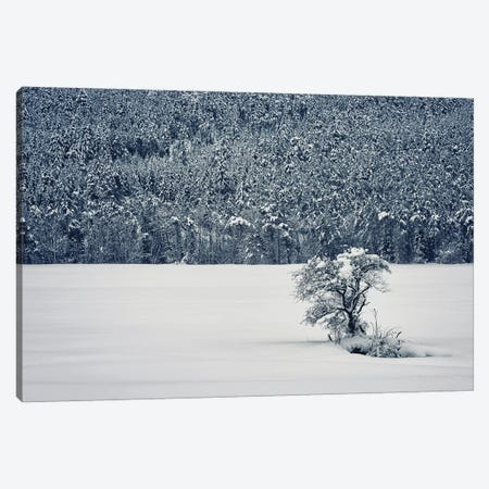 Winter Is Coming Canvas Print #EMN130} by Manjik Pictures Canvas Artwork