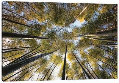 Bamboo Grove Canvas Art Print