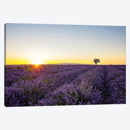 Lavender Canvas Print #EMN233} by Manjik Pictures Canvas Art Print