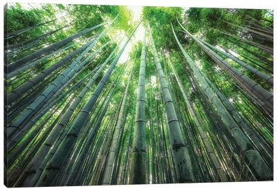 Into The Bamboo Canvas Art Print