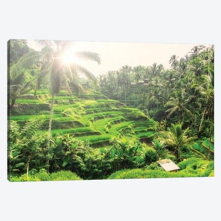 Tegalalang Canvas Print #EMN542} by Manjik Pictures Canvas Print