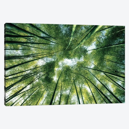 Bamboo World Canvas Print #EMN610} by Manjik Pictures Canvas Art Print