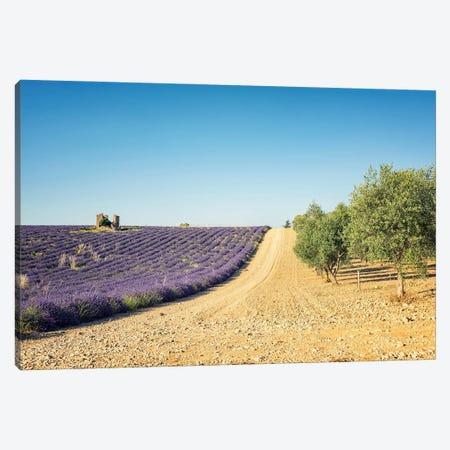 Lavender Vs Olive Trees Canvas Print #EMN631} by Manjik Pictures Canvas Print