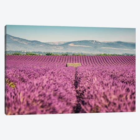 Lavender Field Canvas Print #EMN66} by Manjik Pictures Canvas Art Print